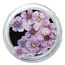 Dry Flowers - Violet 20pcs