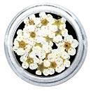 Dry Flowers - White 20pcs
