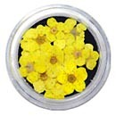 Dry Flowers - Yellow 20pcs