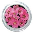 Dry Flowers - Pink 20pcs